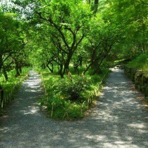 京都の下鴨神社にて運気をアップ!大人のための開運神社散歩